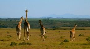 Mon 1er safari en Afrique du Sud