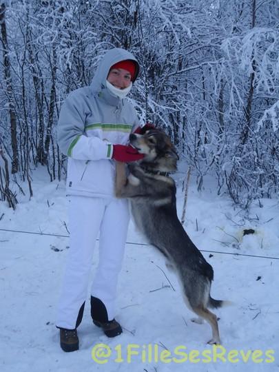 En train de faire connaissance avec les chiens qui vont tirer le traineau