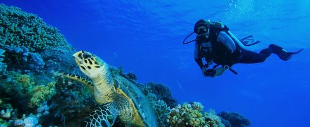 Vous rêvez de plonger ? Plongez en méditerranée !